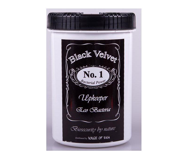 Black Velvet Sustenance Bacteria